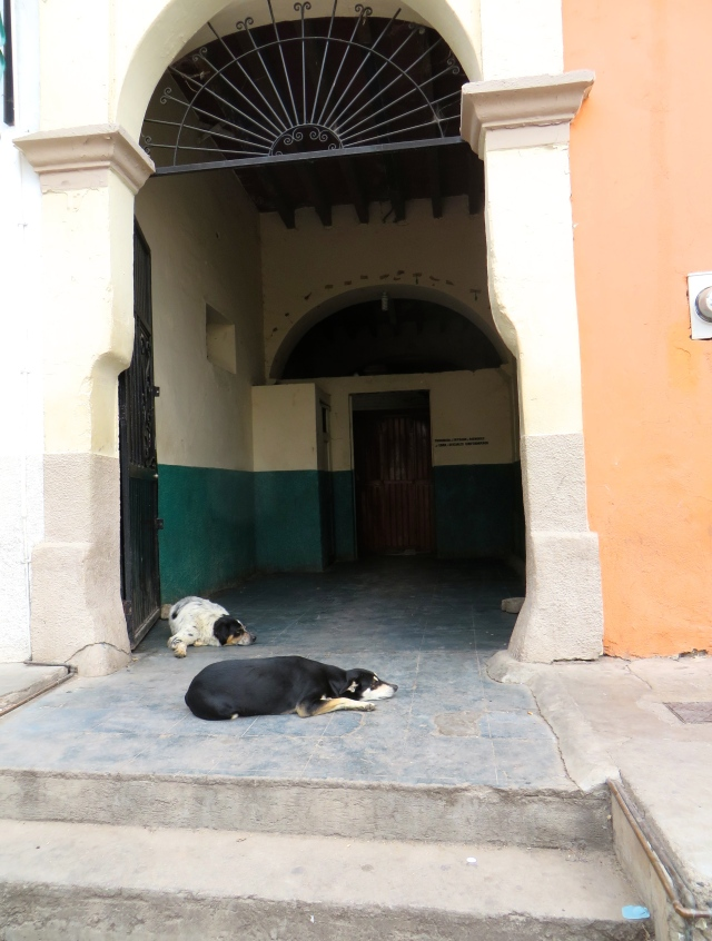 Two dogs sleeping at the entrance to Casino Señorial, the men's only cantina on the Alameda in Alamos