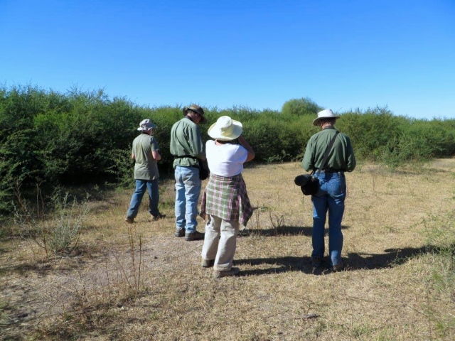 Birding a patch of brush that has escaped cultivation.