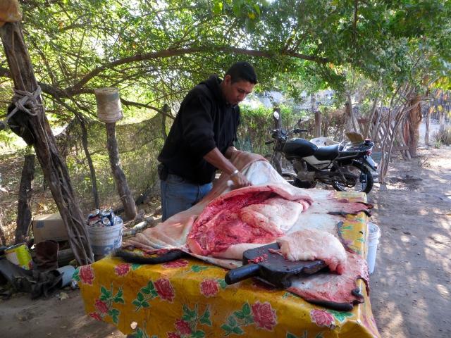Un señor está matando un cerdo en el pueblo Acatitán en Sinaloa, 3 de marzo 2016.