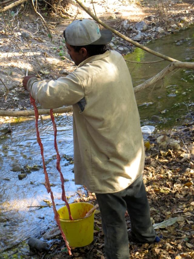 ...Cuando otro seńor está lavando los intestinos en el arroyo. ...While another man is washing the intestines in a stream.