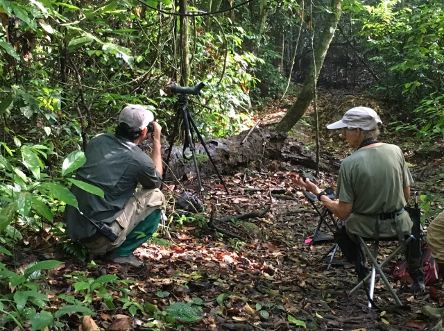 Napoleon Dumas and Rose Ann Rowlett on the Hornbill Trail at Borneo Rainforest Lodge, working on three shy birds, Blue-headed Pitta, Bornean Banded Pitta, and Bornean Ground-Cuckoo Photo by Suzanne Winckler