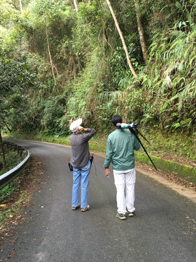 Rose Ann Rowlett and Hazwan bin Suban listening for the Fruithunter (Chlamydochaera jefferyu) on the road at Mt. Kinabalu Park. Photo by Suzanne Winckler