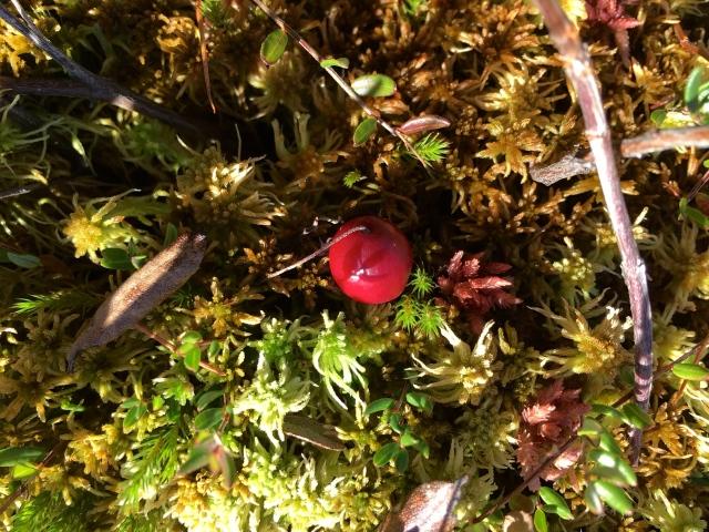 Ruby jewel.