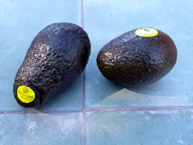 Two avocados, which I purchased in Alamos, Sonora, on November 26, 2016.