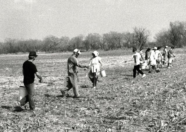 JPGB & W, famous 1994 prairie planting lineup